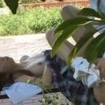 【カップル隠し撮り動画】昼間から堂々と公園でパコパコSEXしている学生カップルww