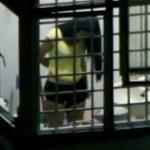 【リアル盗撮動画】アジアでも特に治安の良いシンガポールで向かいマンションのお嬢さんが着替えるのを覗き撮り!